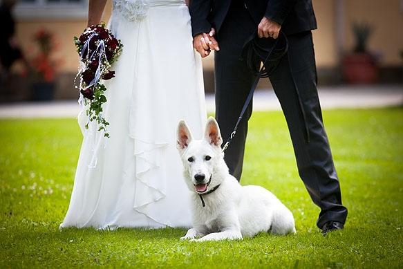 Hochzeitsfotografie Barockschloß Oberlichtenau: Tierischer Begleiter